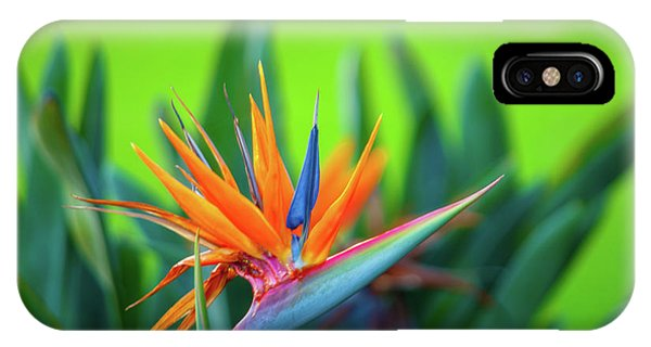 Victoria Falls Bird Of Paradise IPhone Case