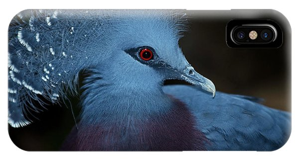 Victorian Crowned Pigeon IPhone Case
