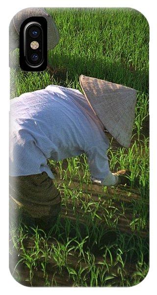 Vietnam Paddy Fields IPhone Case