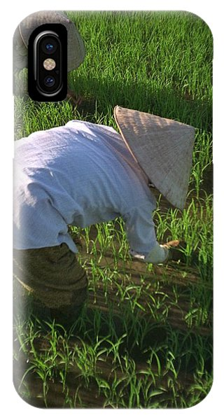Vietnam Paddy Fields IPhone Case