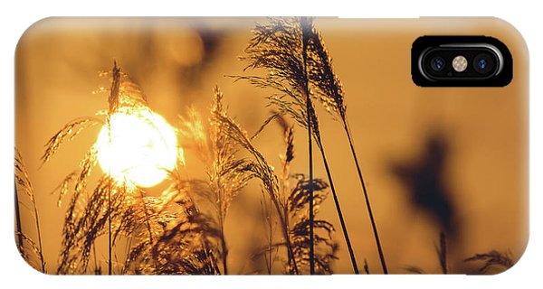 View Of Sun Setting Behind Long Grass C IPhone Case