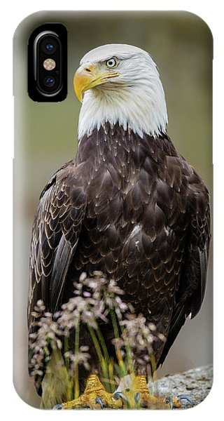 Vigilance IPhone Case