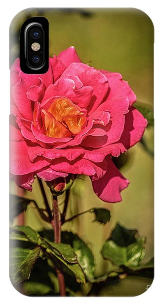 Rosebush iPhone Case - Vignetted  Rose by Robert Bales