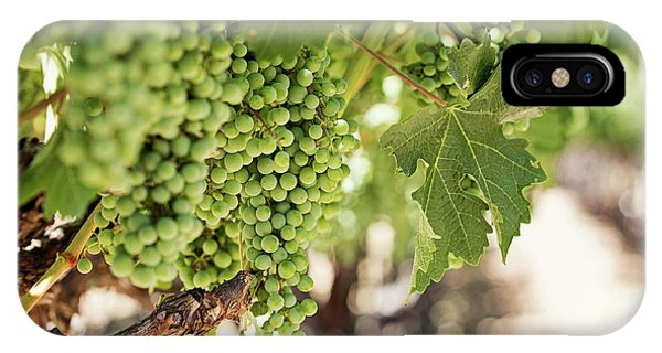 Wine Vineyard Of St. Helena - Grapevine Napa Valley Photography IPhone Case