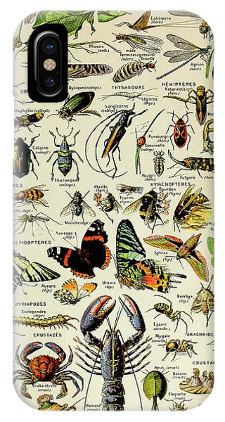 Vintage Illustration Of Various Invertebrates IPhone Case
