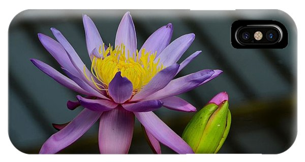 Violet And Yellow Water Lily Flower With Unopened Bud IPhone Case