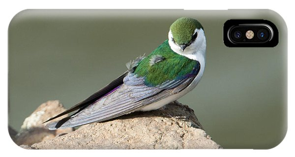 Violet-green Swallow IPhone Case