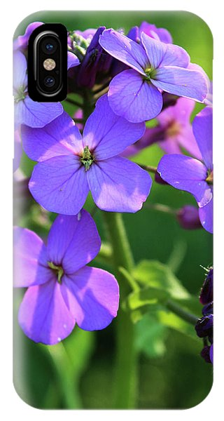 IPhone Case featuring the photograph Purple Flower by Melinda Blackman