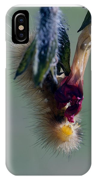 Virginia Tiger Moth 3 IPhone Case