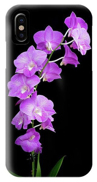 Vivid Purple Orchids IPhone Case