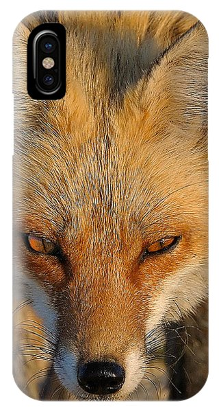 Vixen IPhone Case