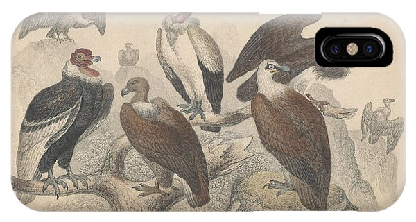 Condor iPhone Case - Vultures by Dreyer Wildlife Print Collections