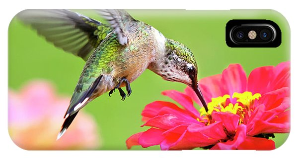 Waiting In The Wings Hummingbird Square IPhone Case
