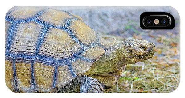 Walking Turtle IPhone Case