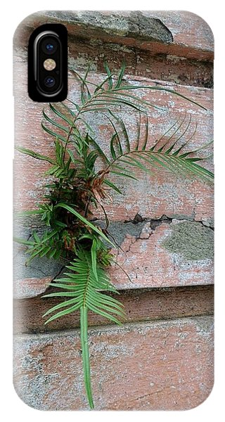 Wall Fern IPhone Case