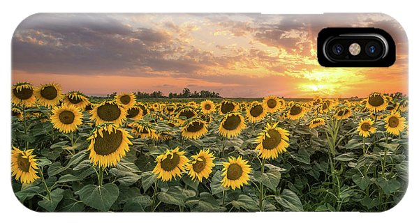 Wall Of Sunflowers IPhone Case