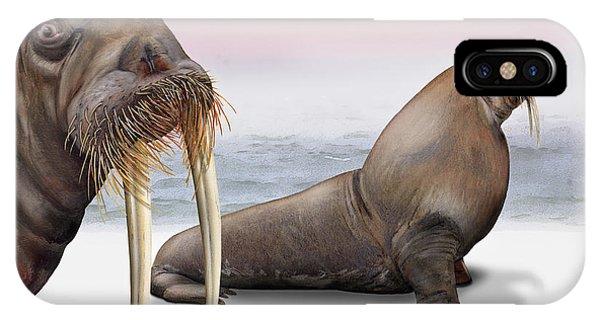 Walrus Odobenus Rosmarus - Morse - Morsa - Tricheco - Mursu - Rostungur - Ivory Tusks - Inuit IPhone Case