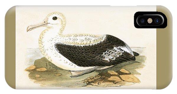 Albatross iPhone Case - Wandering Albatross by English School