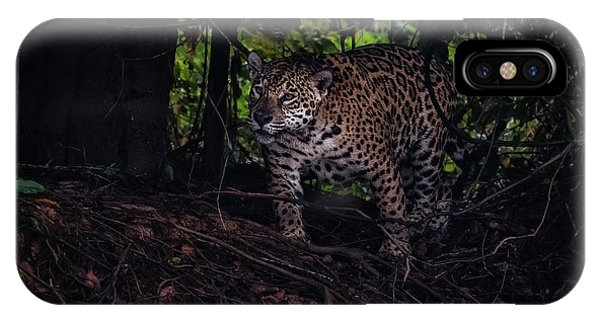Wandering Jaguar IPhone Case