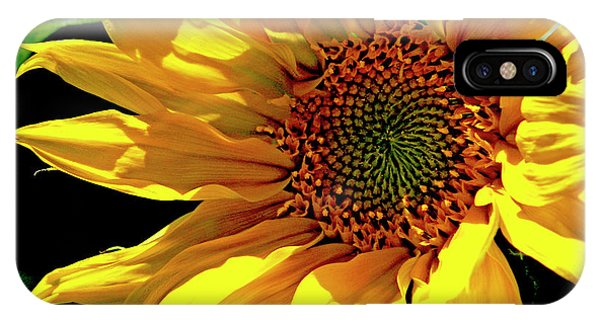Warm Welcoming Sunflower IPhone Case