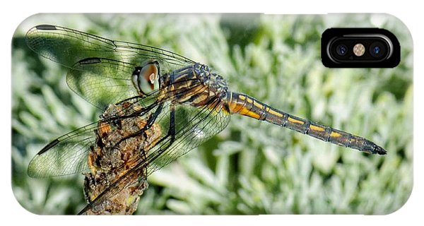 Warming-up - Darner Dragonfly IPhone Case