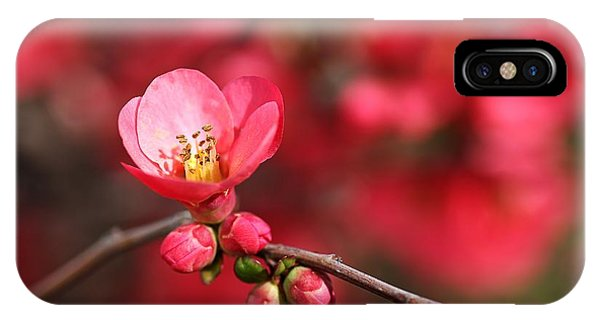 Warmth Of Flowering Quince IPhone Case