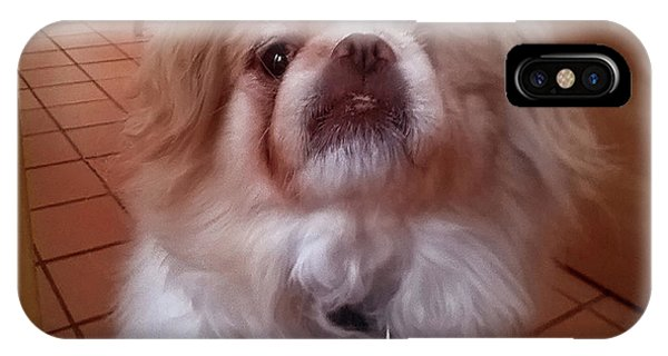 IPhone Case featuring the photograph Wasabi The Wonder Dog by Roger Bester