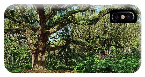 Washington Oaks Gardens IPhone Case