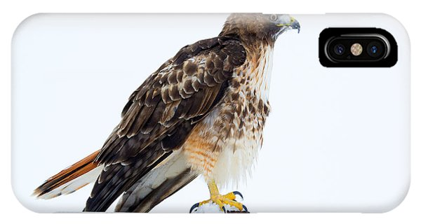 Red Tail Hawk iPhone Case - Watcher by Mike Dawson