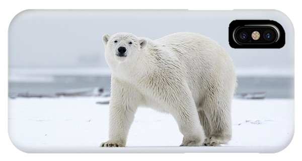 Watchful In The Arctic IPhone Case
