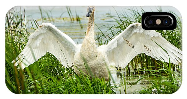 Horicon Marsh iPhone Case - Watching Over by Steven Santamour