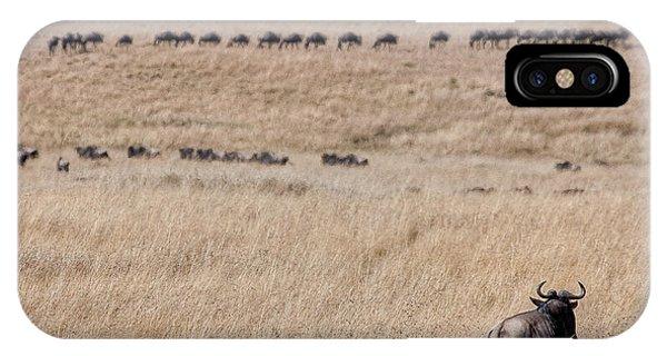 Watching The Herd IPhone Case