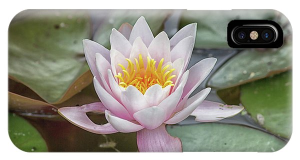 Aquatic Plants iPhone Case - Water Lily by Martin Newman