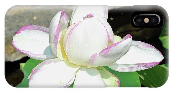 Water Lotus IPhone Case