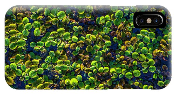 Cypress iPhone Case - Water Plants by Marvin Spates