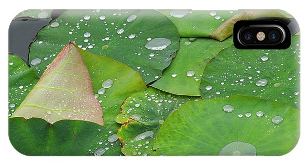 Pond iPhone Case - Waterdrops On Lotus Leaves by Silke Magino