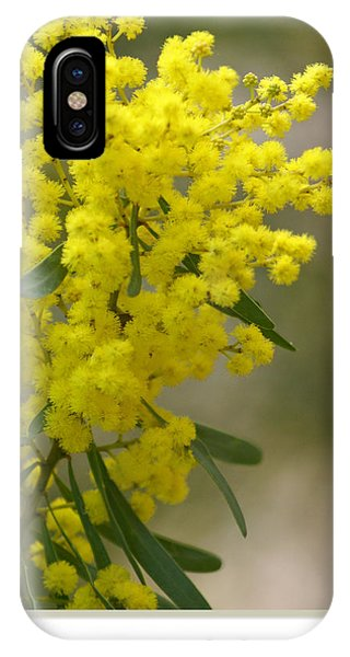 iPhone Case - Wattle by Holly Kempe