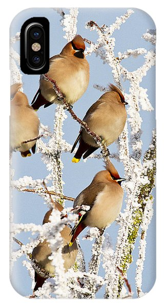 Waxwings And Hoar Frost IPhone Case