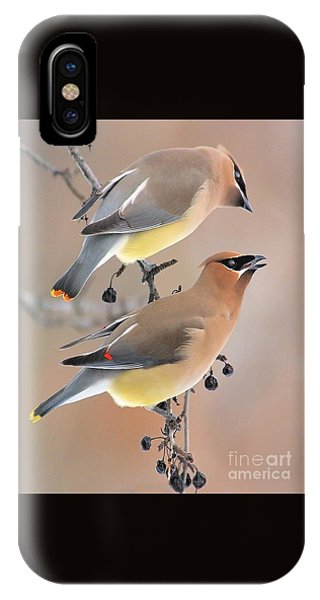 Waxwings IPhone Case
