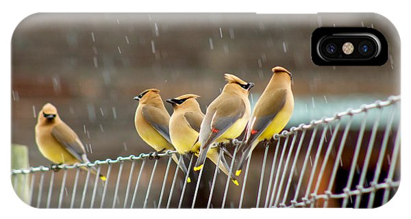 Waxwings In The Rain IPhone Case