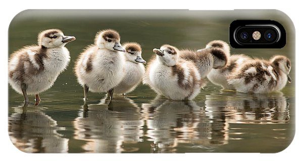 Goslings iPhone Case - We Are Family - Seven Egytean Goslings In A Row by Roeselien Raimond