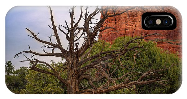 Weathered Tree At Courthouse Butte IPhone Case
