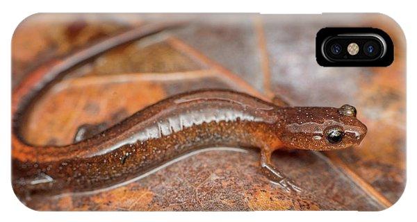 Webster's Salamander Phone Case by Derek Thornton