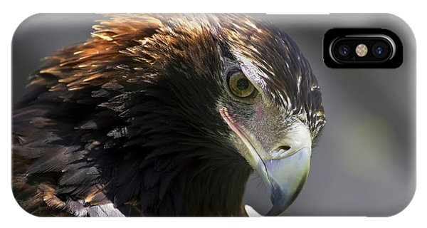 Wedge Tail Eagle IPhone Case