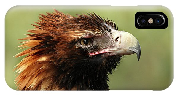 Wedge-tailed Eagle IPhone Case