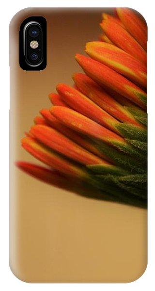 Wee Gerber Daisy In Bloom - Georgia IPhone Case