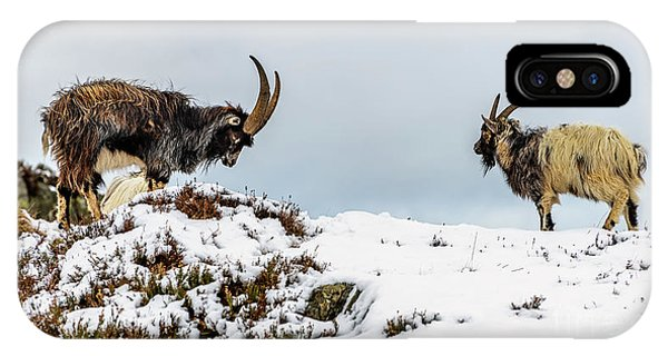 Goat iPhone Case - Welsh Mountain Goats by Adrian Evans