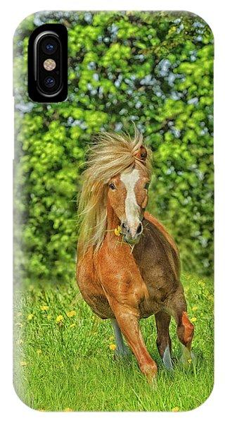 Welsh Pony IPhone Case