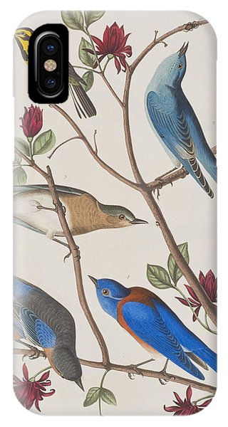Bluebird iPhone Case - Western Blue-bird by John James Audubon