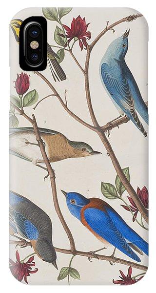 Audubon iPhone X Case - Western Blue-bird by John James Audubon